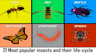 Animals Life Cycle - Insects and Arachnids-2