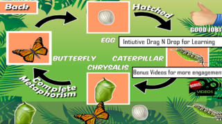 Animals Life Cycle - Insects and Arachnids App - 4