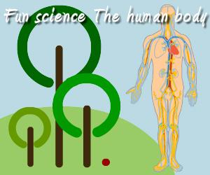 Fun science: The human body