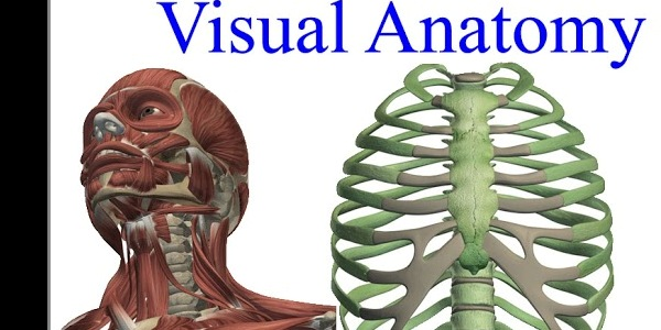Visual Anatomy