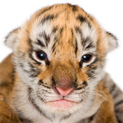 Cute Baby Animals - Puppies, Kittens, Bunnies, and Cubs