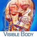 Human Anatomy Atlas SP